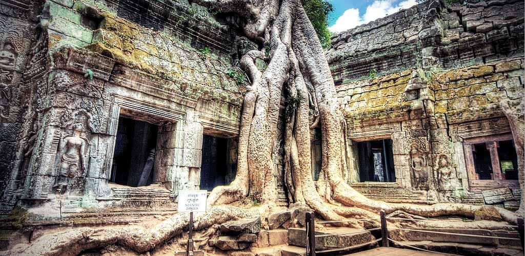Tree roots climb a temple in Angkor, Cambodia