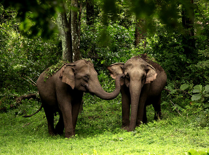 Tholpetty Elephant Sanctuary, India