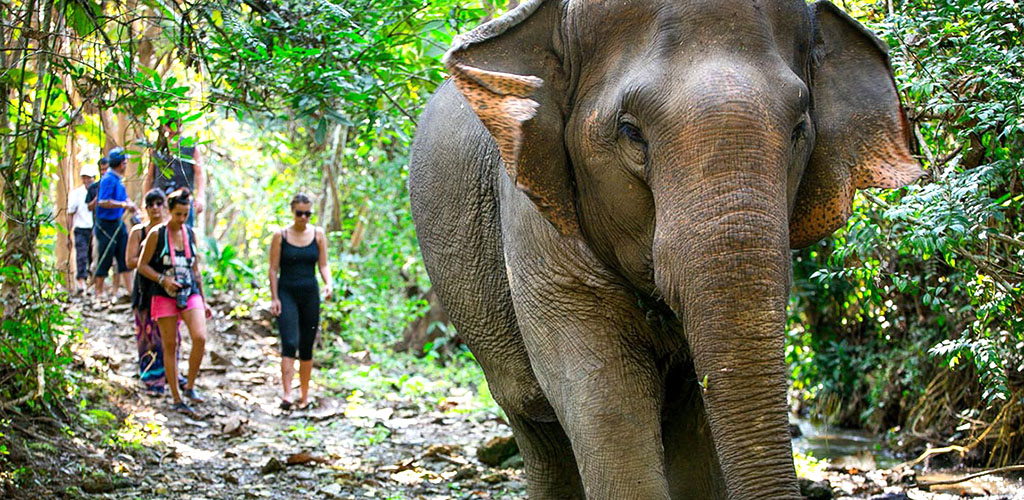 Trekking with elephants in Luang Prabang, Laos
