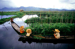 Inle Lake boaters