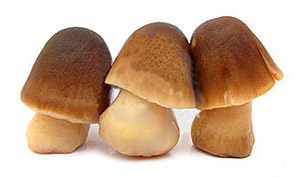 Straw mushroom (hed fang)