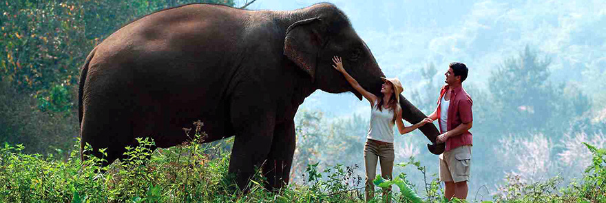 Couple with elephant at the Four Season's Tented Camp in the Golden Triangle, Thailand
