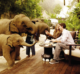 Baby elephants at the Four Seasons Tented Camp Thailand