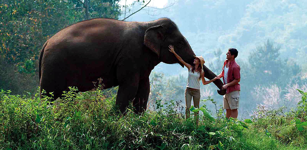 Thai elephant with couple in Chiang Rai camp