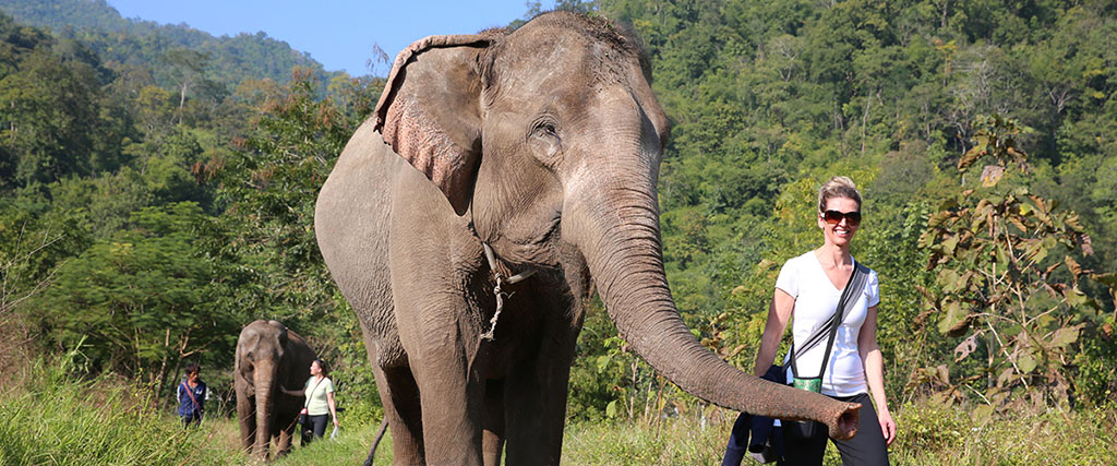 Hiking with Elephant at the Elephant Nature Park in Thailand
