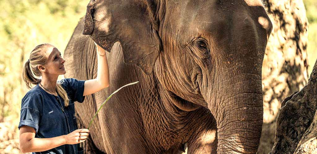 Petting an elephant at Anantara Golden Triangle resort