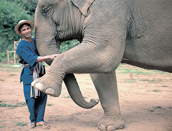 Elephant and mahout in Chiang Rai, Thailand