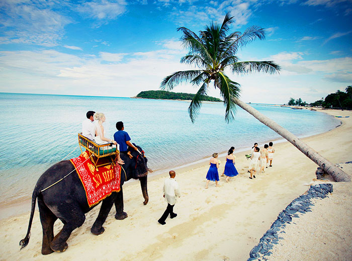 Honeymoon elephnat ride on Koh Samui, Thailand