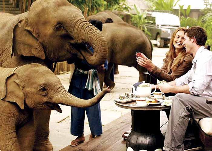 Breakfast with elephants during honeymoon in Thailand