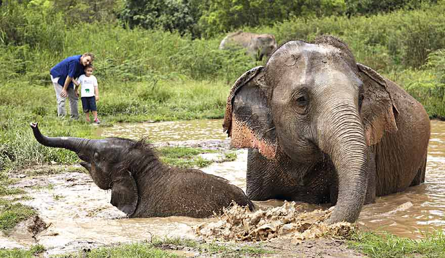 Family at elephant camp in Chiang Rai, Thailand